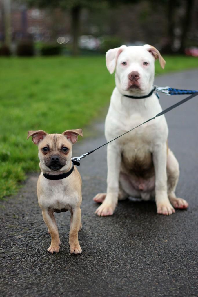 Vinnie and Bailey